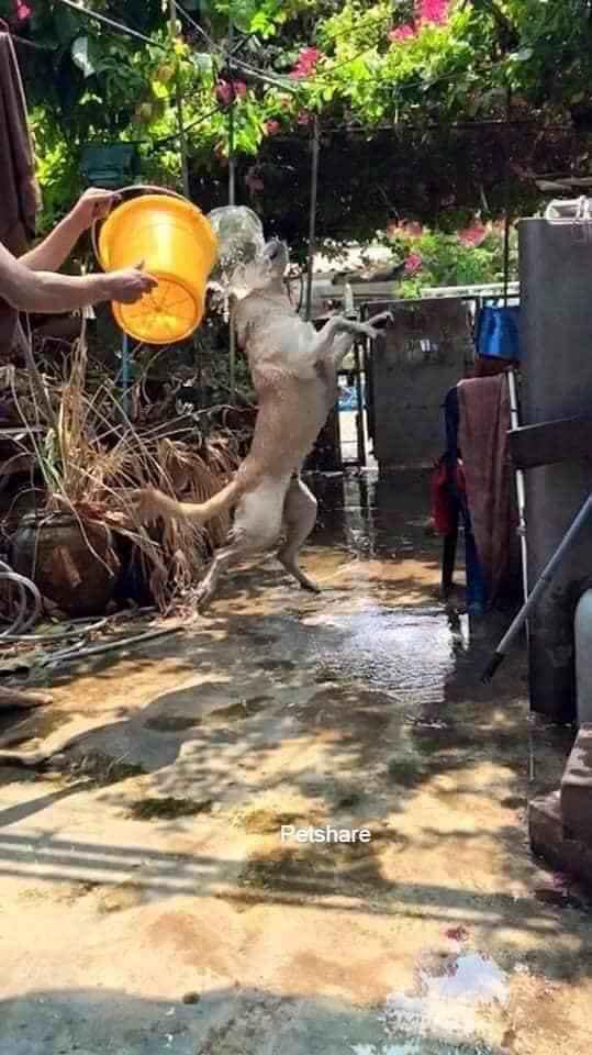 Đại boss bị con sen mang ra tổ chức lễ hội té nước tại gia, nào ngờ lại bộc lộ khí chất uy nghi như một vị thần-2