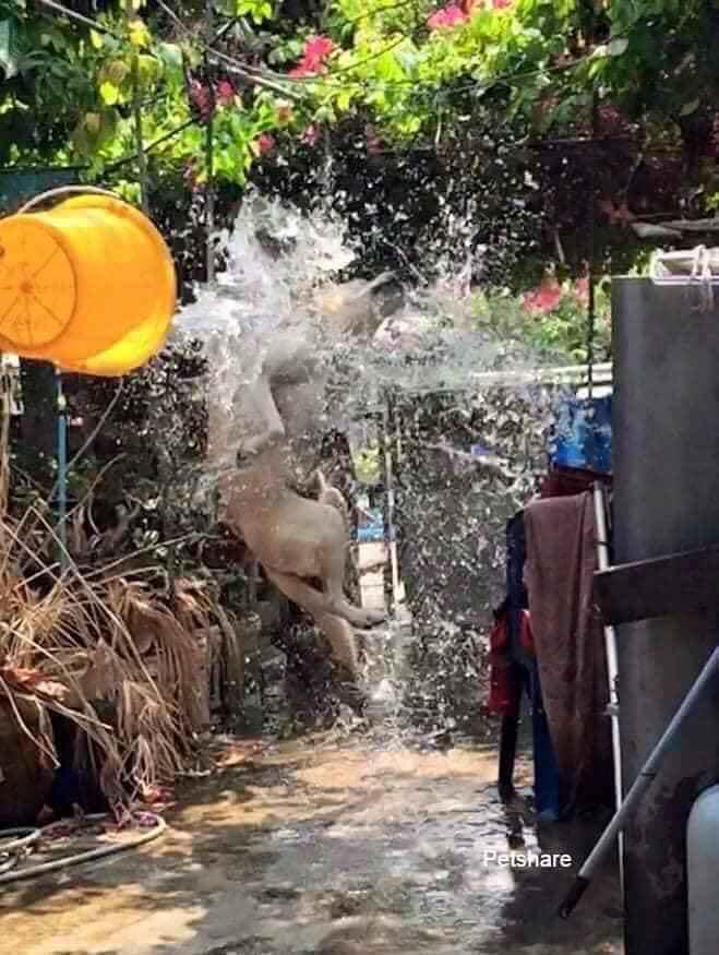Đại boss bị con sen mang ra tổ chức lễ hội té nước tại gia, nào ngờ lại bộc lộ khí chất uy nghi như một vị thần-3
