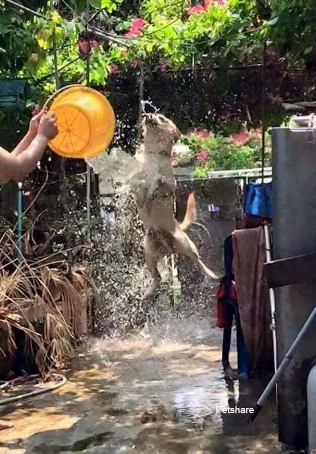 Đại boss bị con sen mang ra tổ chức lễ hội té nước tại gia, nào ngờ lại bộc lộ khí chất uy nghi như một vị thần-4