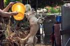 Đại boss bị con sen mang ra tổ chức lễ hội té nước tại gia, nào ngờ lại bộc lộ khí chất uy nghi như một vị thần