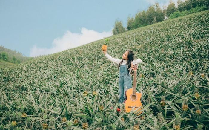 Bắc Giang cũng có một cánh đồng dứa đẹp mơ màng chẳng kém gì Ninh Bình-1