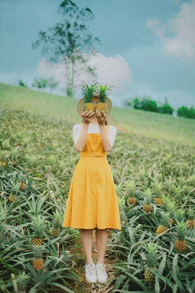 Bắc Giang cũng có một cánh đồng dứa đẹp mơ màng chẳng kém gì Ninh Bình-6