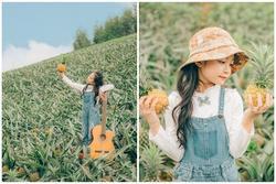 Bắc Giang cũng có một cánh đồng dứa đẹp mơ màng chẳng kém gì Ninh Bình