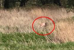 Bất chấp dịch bệnh, cặp đôi khỏa thân 'mây mưa' giữa đồng cỏ khiến ai nhìn cũng hãi