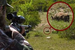 Bố dùng súng bắn chết con trai vì tưởng là lợn rừng