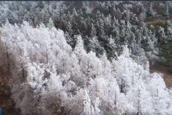 Tuyết đầu xuân phủ trắng núi Thái Bình