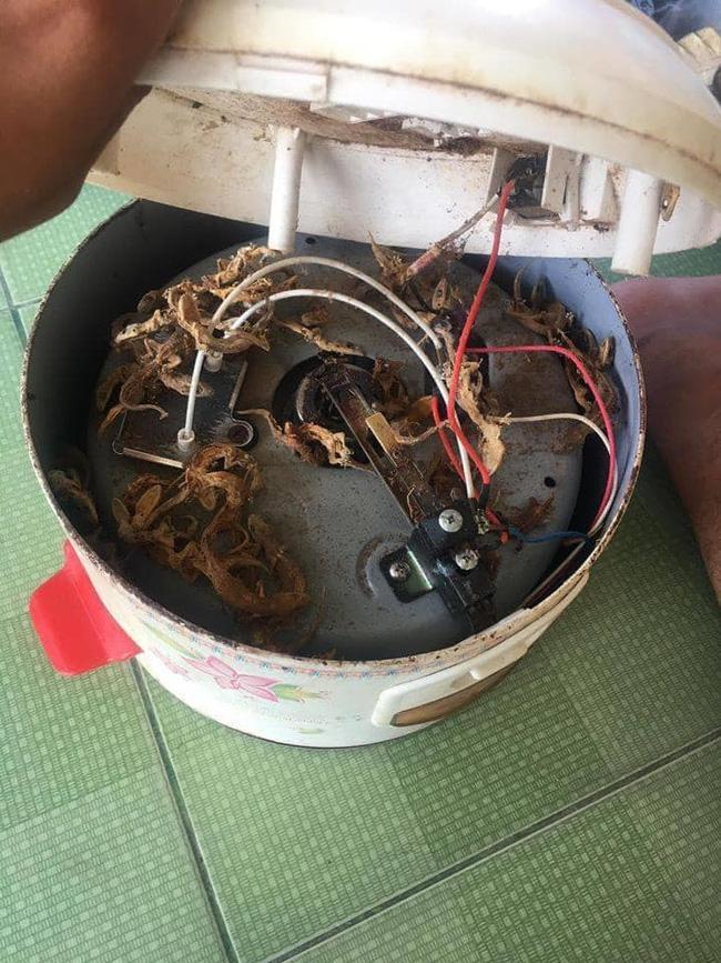 Lâu ngày tháo nồi cơm điện ra sửa, thanh niên thất kinh khi thấy thứ bên trong-1
