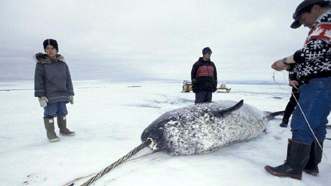 Tộc người sống ở nơi băng tuyết phủ quanh năm: Không hôn nhau vì sợ dính chặt môi-12
