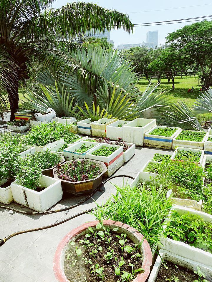 Choáng ngợp với nhà vườn hoành tráng của Bảo Thy và chồng đại gia-2