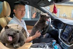 Lộ diện 'con sen' của chú chó Nguyễn Văn Dúi: Đã đẹp trai lại còn siêu giàu