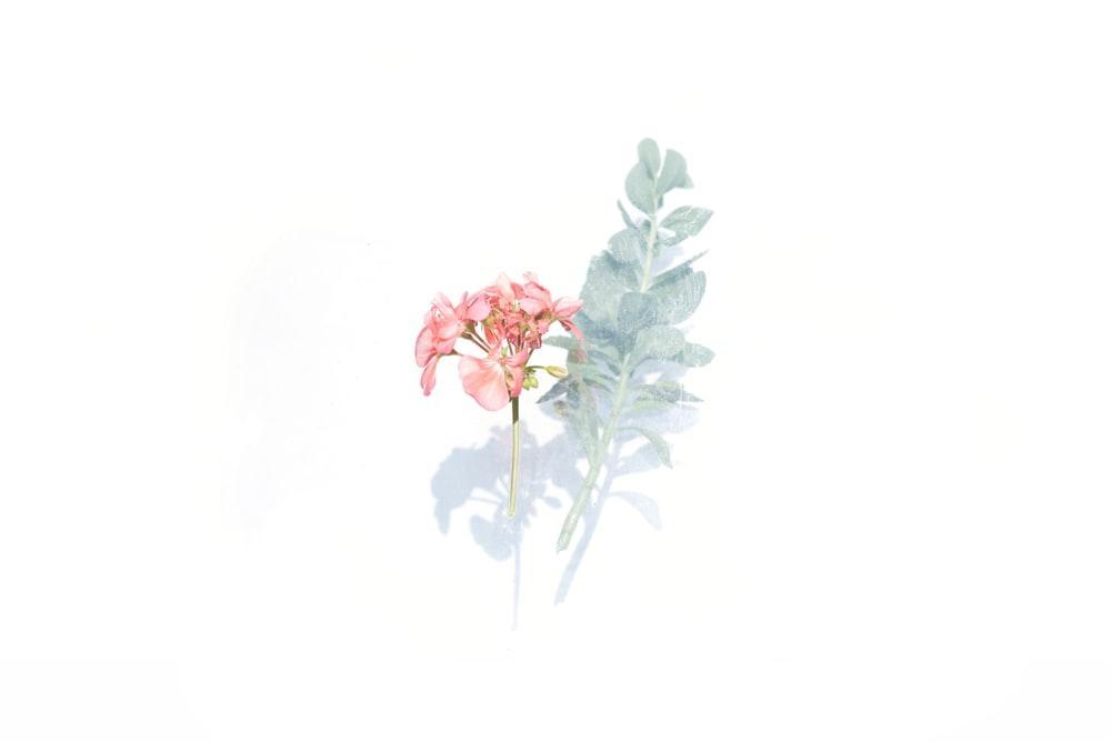Tử vi thứ 7 ngày 2/5/2020 của 12 con giáp: Tý tình yêu như ý, Ngọ không may lỡ lời-6