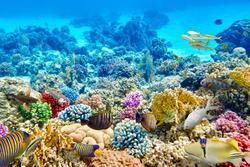 Điều gì sẽ xảy ra nếu tất cả rạn san hô biến mất?
