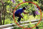 Người đàn ông bẻ hoa phượng tím ở Đà Lạt khai gì?
