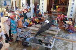 Cá voi nặng hơn 1 tấn chết trong vịnh Nha Trang