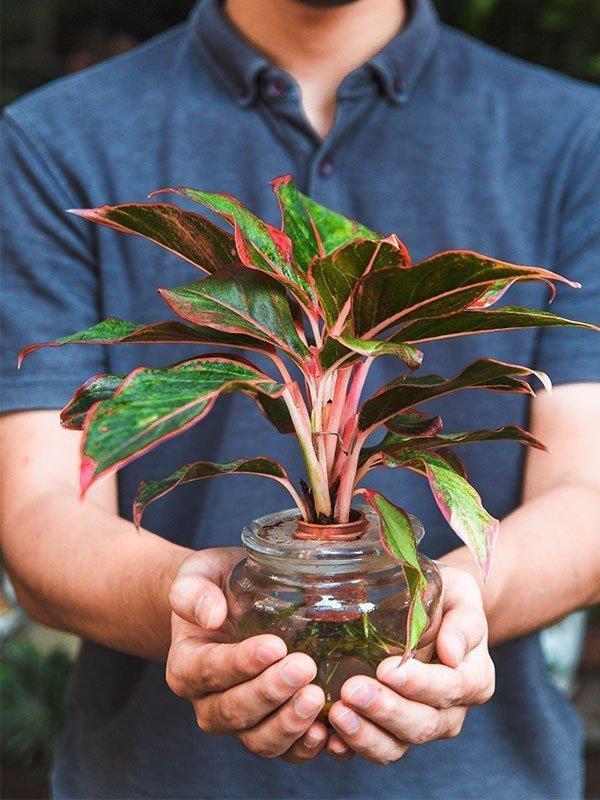 5 loại cây cảnh dễ chăm sóc, giúp thanh lọc không khí, mang lại nhiều may mắn về tài lộc-2