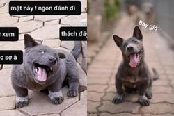 Chú chó quốc dân Nguyễn Văn Dúi 'dậy thì' kinh ngạc sau 3 tháng nổi đình đám MXH