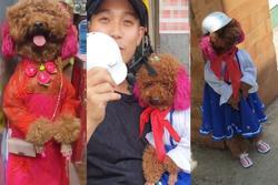 MXH Việt phát cuồng cô chó đi bằng 2 chân, video mới xuất hiện hút gần 5,5 triệu lượt xem