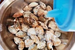Ngoài muối, thêm vài giọt nguyên liệu này khi ngâm ngao đảm bảo nhả sạch cát không còn một hạt