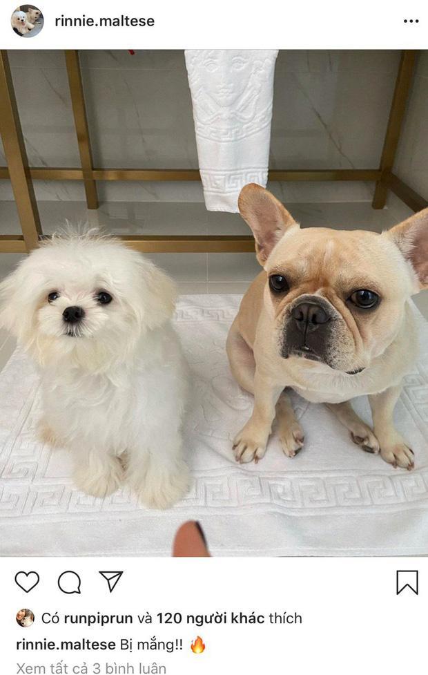 Lộ bằng chứng Phillip Nguyễn đưa Linh Rin và cún cưng về villa ở Vũng Tàu nghỉ dưỡng-5