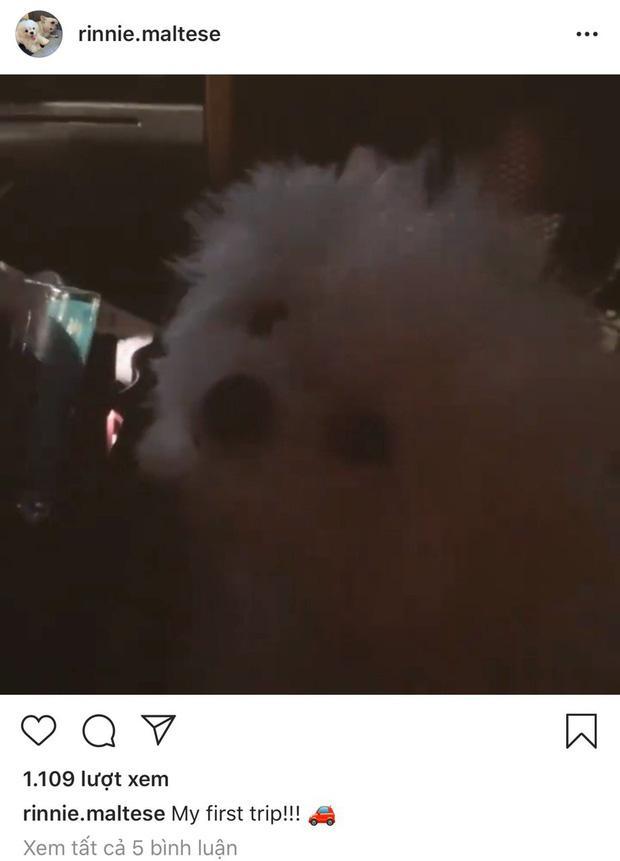 Lộ bằng chứng Phillip Nguyễn đưa Linh Rin và cún cưng về villa ở Vũng Tàu nghỉ dưỡng-6