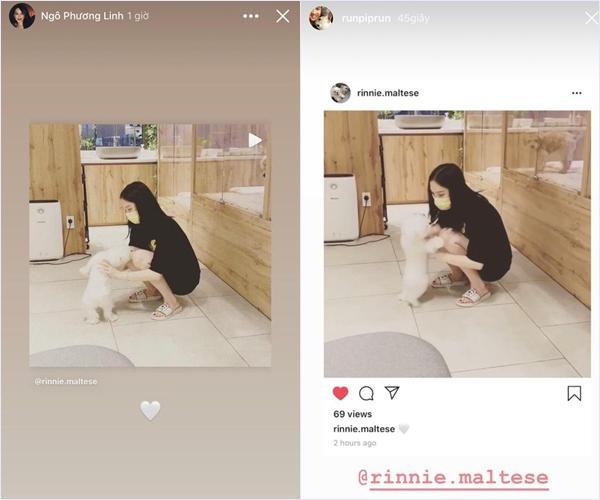 Lộ bằng chứng Phillip Nguyễn đưa Linh Rin và cún cưng về villa ở Vũng Tàu nghỉ dưỡng-2