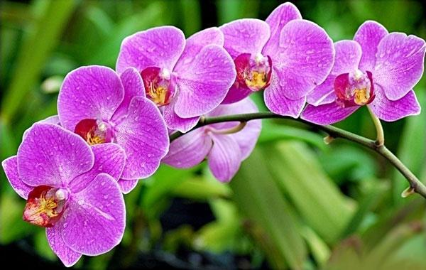 5 loại hoa đẹp bày trong phòng khách giúp hút tài lộc, rước thêm tiền của vào nhà-1