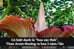 Bông hoa nặng 77 kg, lớn nhất thế giới