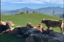 Cuộc sống hòa mình với thiên nhiên tại đất nước Thụy Sĩ