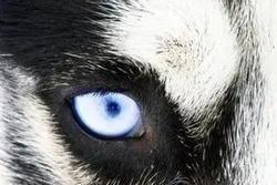 Chọn ánh mắt đáng sợ nhất, câu trả lời sẽ tiết lộ bạn là người tuyệt tình như thế nào, sẵn sàng buông bỏ hay vẫn có khả năng xiêu lòng