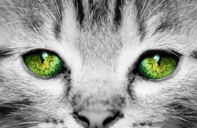 Chọn ánh mắt đáng sợ nhất, câu trả lời sẽ tiết lộ bạn là người tuyệt tình như thế nào, sẵn sàng buông bỏ hay vẫn có khả năng xiêu lòng-1