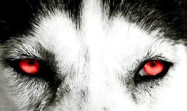 Chọn ánh mắt đáng sợ nhất, câu trả lời sẽ tiết lộ bạn là người tuyệt tình như thế nào, sẵn sàng buông bỏ hay vẫn có khả năng xiêu lòng-2