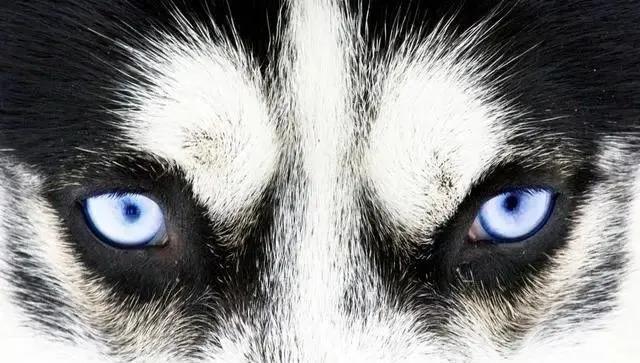 Chọn ánh mắt đáng sợ nhất, câu trả lời sẽ tiết lộ bạn là người tuyệt tình như thế nào, sẵn sàng buông bỏ hay vẫn có khả năng xiêu lòng-4