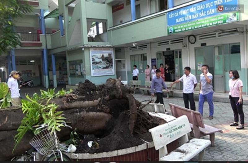 Vụ cây bật gốc đè chết học sinh lớp 6 ở Sài Gòn: Hiệu trưởng nói gì về thông tin cựu học sinh từng cảnh báo cây phượng có nguy cơ đổ từ trước?-1