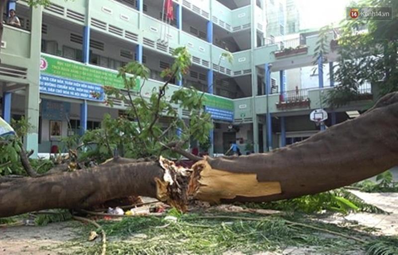 Vụ cây bật gốc đè chết học sinh lớp 6 ở Sài Gòn: Hiệu trưởng nói gì về thông tin cựu học sinh từng cảnh báo cây phượng có nguy cơ đổ từ trước?-2