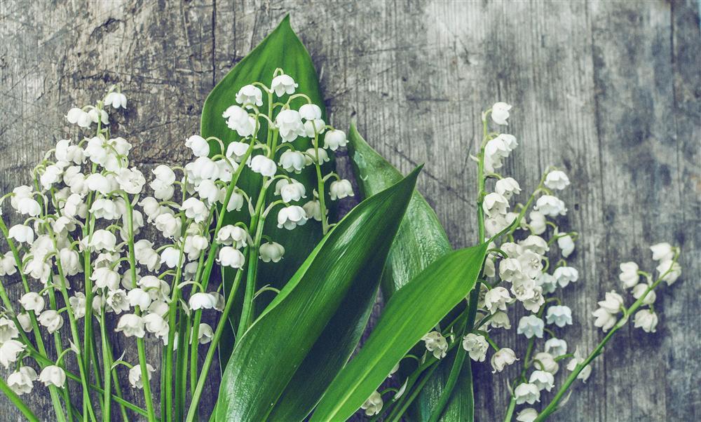 Chọn bó hoa thích nhất để biết bạn có bao nhiêu người yêu-3