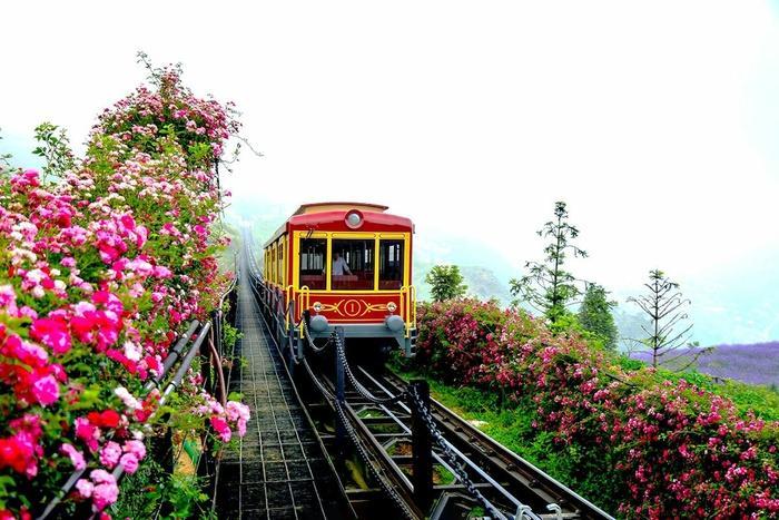 Lên Sapa ghé thăm thung lũng hoa hồng lớn nhất Việt Nam-6