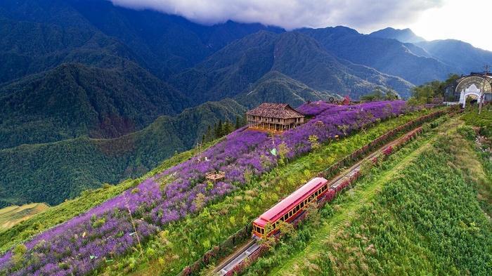 Lên Sapa ghé thăm thung lũng hoa hồng lớn nhất Việt Nam-7