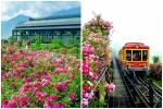 Bạn gái cũ Quang Hải tạo dáng xinh đẹp trên con đường hoa giấy nổi khắp mạng xã hội-13