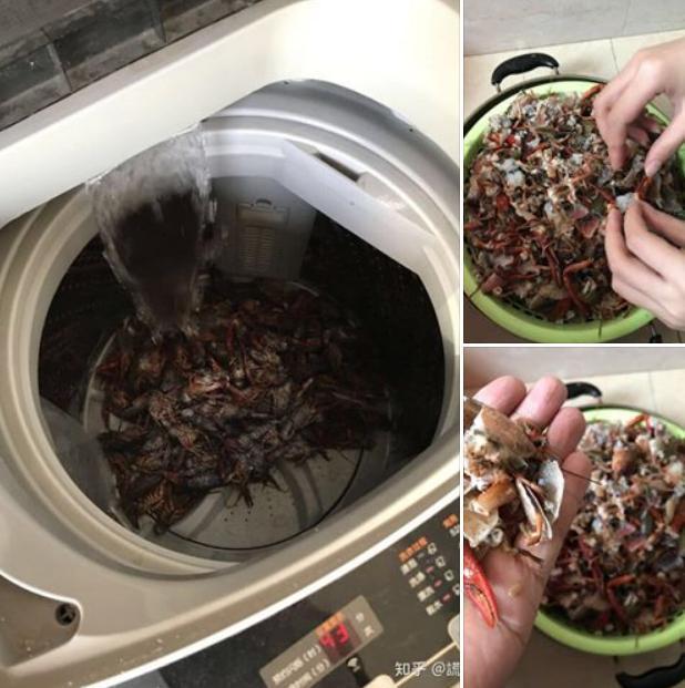 Học mót trên mạng cách làm sạch tôm bằng máy giặt, cặp vợ chồng lười mếu máo nhận cái kết cực đắng-1