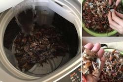 Học mót trên mạng cách làm sạch tôm bằng máy giặt, cặp vợ chồng lười mếu máo nhận cái kết 'cực đắng'