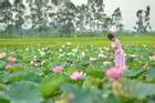 'Đã mắt' với 5 điểm ngắm sen tuyệt đẹp quanh Hà Nội, nhất định phải ghé đến