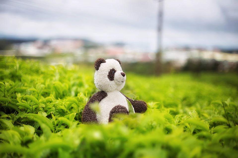 Chàng trai 9X đưa gấu bông đi du hí khắp Đà Lạt-5