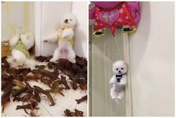 Dân mạng kêu gọi báo cáo kênh Tik Tok làm video ngược đãi động vật