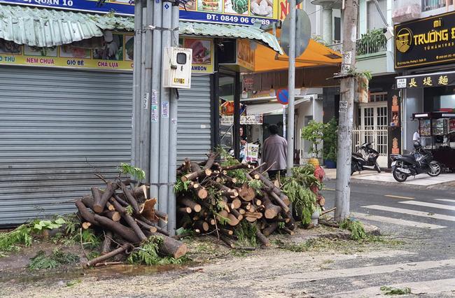 Mưa lớn kèm gió mạnh khiến phượng lại bật gốc, 3 nữ sinh ở Đồng Nai bị đè xây xát-1