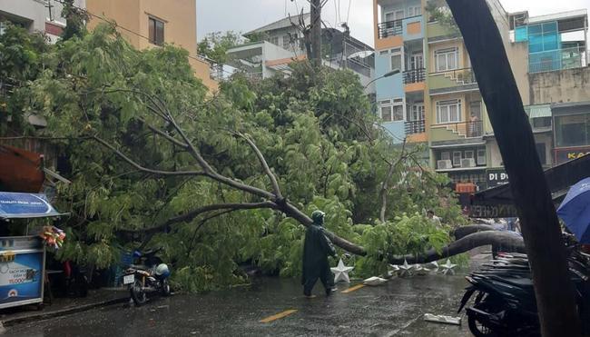 Mưa lớn kèm gió mạnh khiến phượng lại bật gốc, 3 nữ sinh ở Đồng Nai bị đè xây xát-2