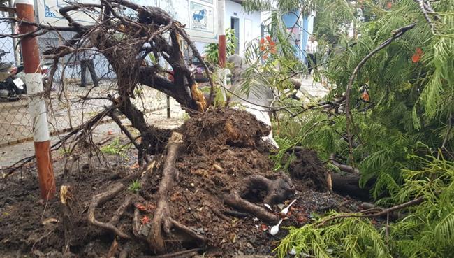Mưa lớn kèm gió mạnh khiến phượng lại bật gốc, 3 nữ sinh ở Đồng Nai bị đè xây xát-6