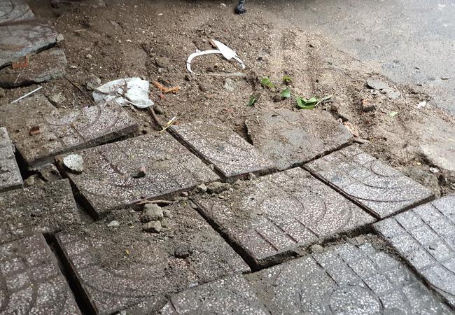 Mưa lớn kèm gió mạnh khiến phượng lại bật gốc, 3 nữ sinh ở Đồng Nai bị đè xây xát-7