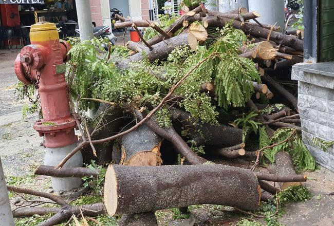 Mưa lớn kèm gió mạnh khiến phượng lại bật gốc, 3 nữ sinh ở Đồng Nai bị đè xây xát-8