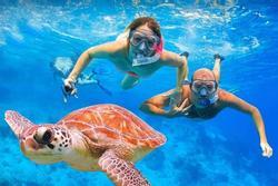 Bơi cùng rùa tại thiên đường ở Hawaii