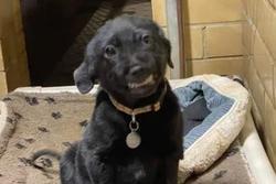 Chú chó bị bỏ rơi nở nụ cười toe toét với hi vọng có người đến nhận nuôi khiến cộng đồng mạng 'tan chảy'